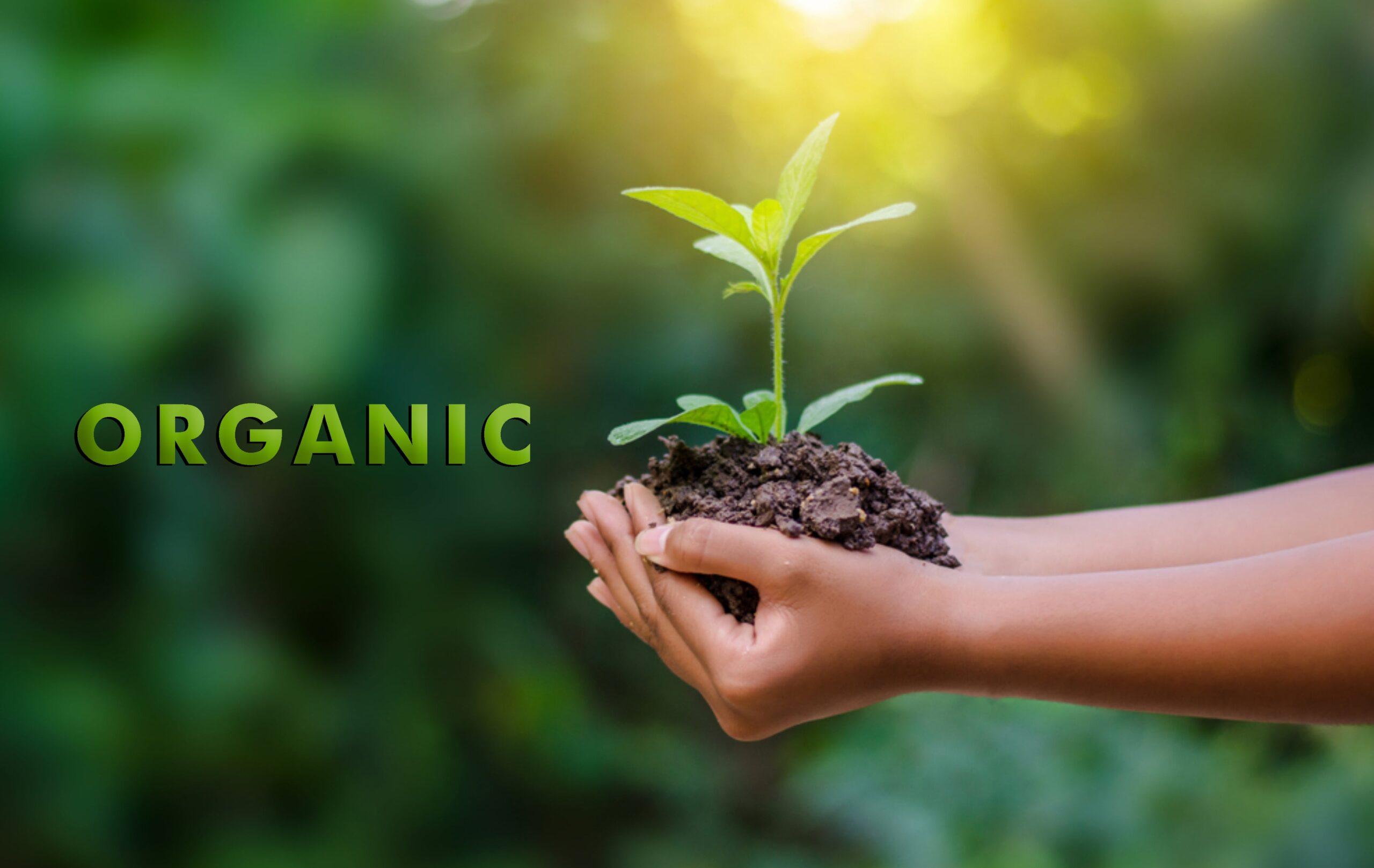 Produk Kosmetik Organik